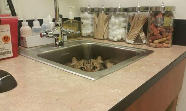 Scared Cat at the Vet