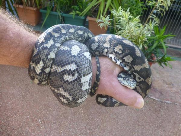 A Little Hug from a Snake