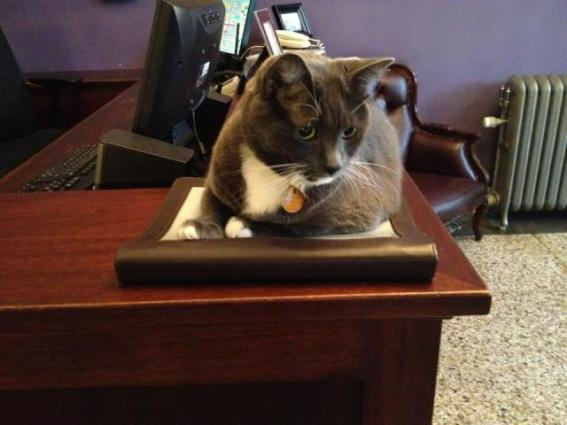 Oreo keeps an eye on everything at the Armstrong Hotel (Image via Facebook)