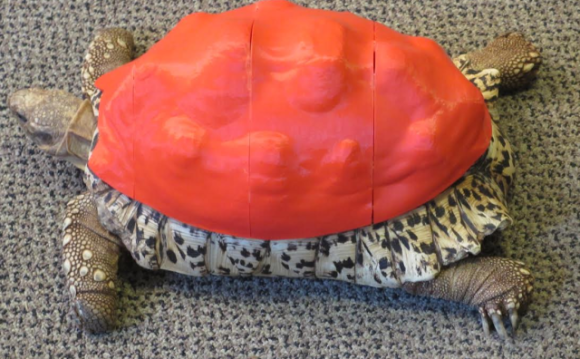 Cleopatra in her New Shell (You Tube Image)