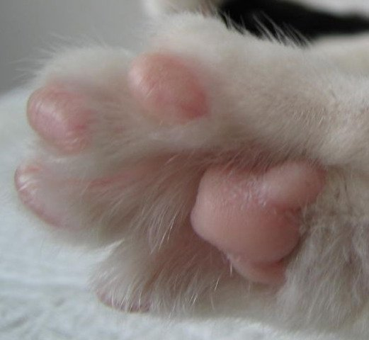Cat's Paw (Photo by Blood1976/Creative Commons via Wikimedia)