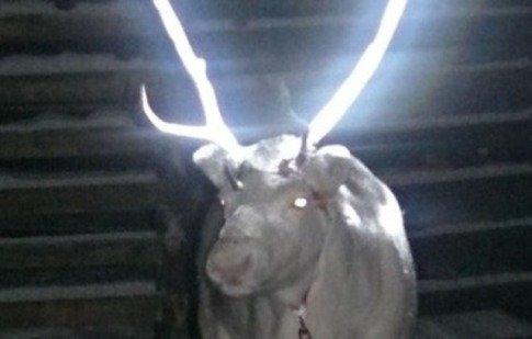 Glow-In-The-Dark Reindeer (You Tube Image)
