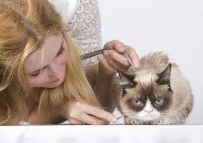 Grumpy Cat at Madame Tussauds Sitting (Image via Grumpy Cat)