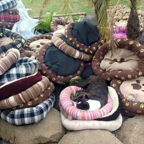Got doggie beds? Why, yes, we do!