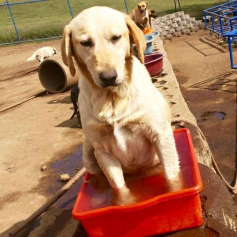 Time for a dip . . . in the wather dish?