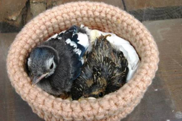 Wildlife Rescue Nests (Image via Facebook)