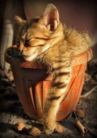 Cat Snoozing in a Pot (Image via Pinterest)