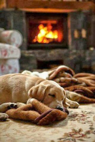 Sleeping Puppy (Image via tumblr)