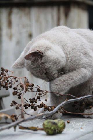 Curious Kitty (Image via imgfave)