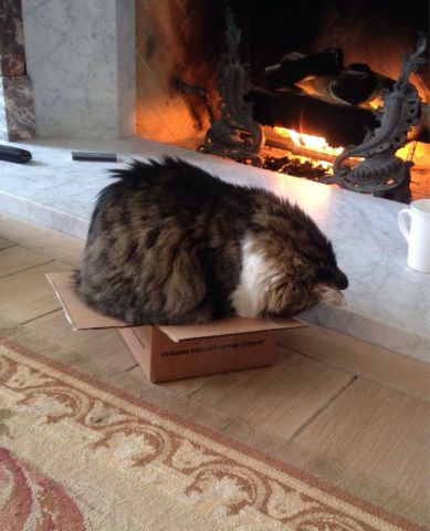 Cat Nap by the Fire (Image via imgur)