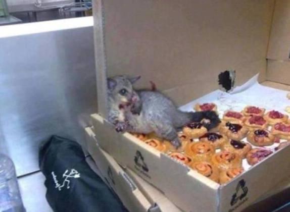 Possum in a Bakery? (Image via Facebook)