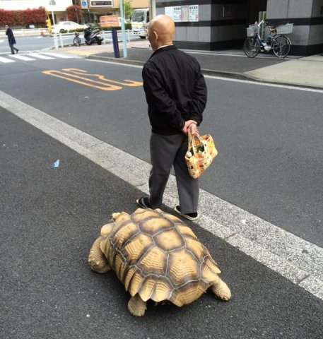 Hisao and Bon-chan Out for a Walk (Image via Rocket24)