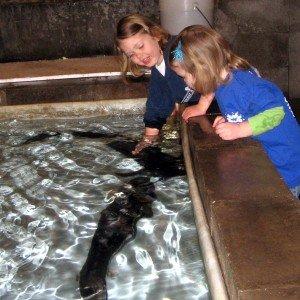 Sturgeon Petting Zoo (Image via Freshwater Farms)