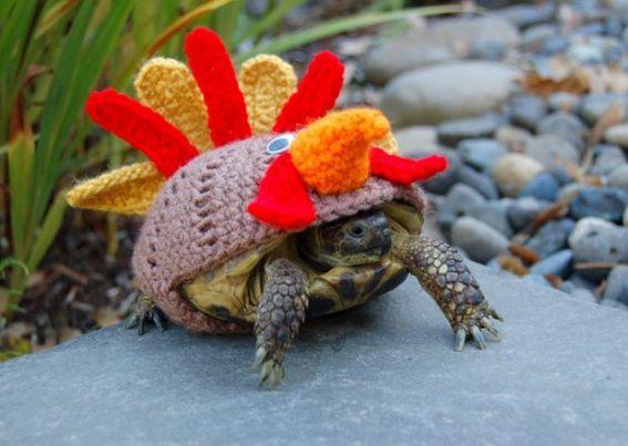 Turkey Turtle (Image via The Guardian)