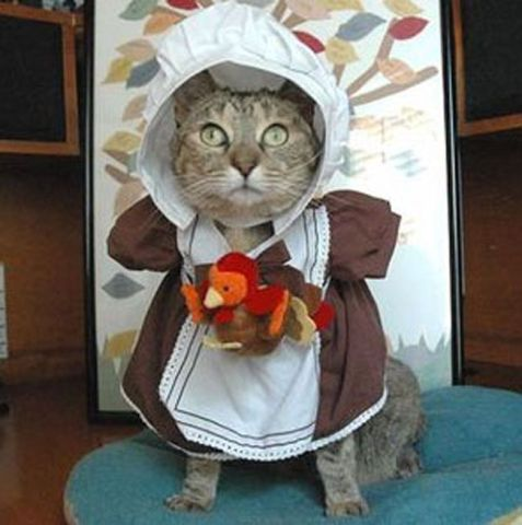Pilgrim Cat (Image via The Pet Collective)