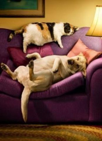 Cat and Dog Revocering From Thanksgiving (Image via Pinterest)