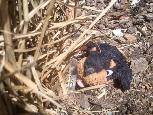 Lost, Dumped & Abandoned Stuffed Animals