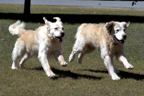Pet Obesity: Active Pets Generally Live Longer, Healthier Lives