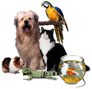 Pet sitting - not just for dogs and cats...: image via personablepetcare.com
