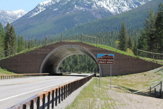 Animal bridge outside of Missoula, Montana: image credit: The Pedigree Artist, via theworldgeography.com