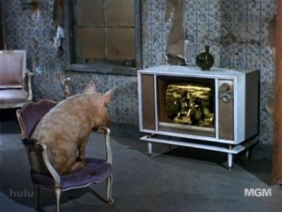 Arnold Ziffel Watching Television