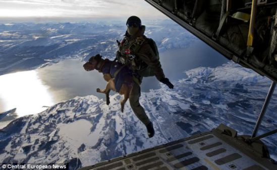 Austria's Special Forces Dog: image via Daily Mail