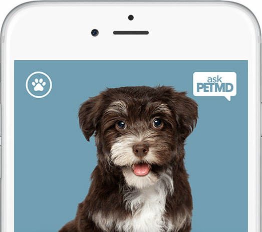 askPETMD App Helps Pet Owners Make Informed Decisions: On-the-go help from PetMD
