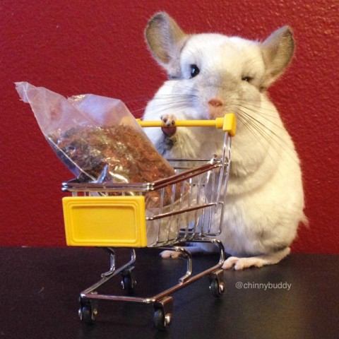 Mr. Bagel, the Chinchilla, Shopping for Dried Rose Hips (Image via Facebook)
