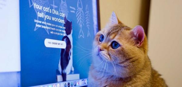 DNA Kit For Cats Reveals Your Feline's Genes