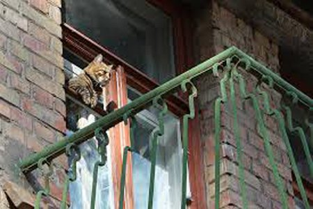 Cat in high rise building: Source:bdaviso15.wordpress.com