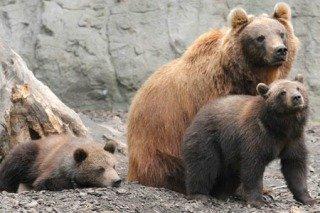 Bears on the watch: image via frumforum.com