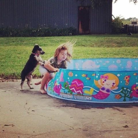 Pushy Dog at the Pool (Image via Daily Entertainment)