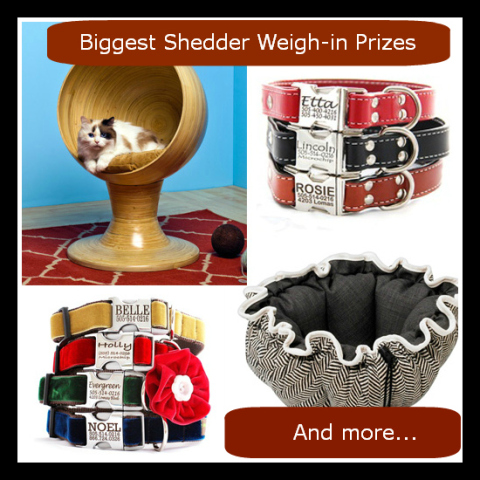 Biggest Shedder Weigh-In Prizes