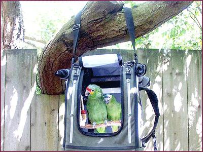 Pak-O-Bird: Source: Bird Home.com