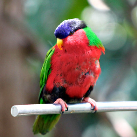 Protecting Your Birds From Heatstroke: Birds can succumb to the affects of heat