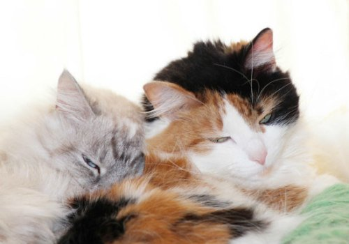 Feline Personalities: Torties, calicos & tabbies have distinct personalities