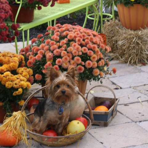 Boarding Pets for the Holidays: Thanksgiving travel sometimes requires pet boarding