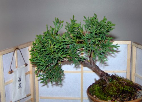 Bonsai trees need specialty soils that can be made using low dust kitty litter
