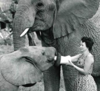 Daphne Sheldrick and Friends (Image via The David Sheldrick Wildlife Trust)