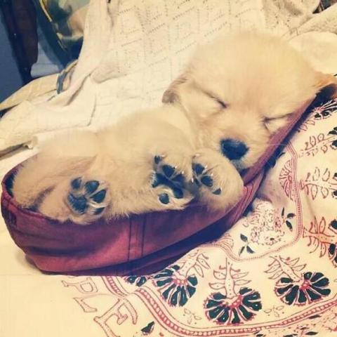 Pocket Puppy (Image via BuzzFeed)