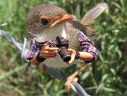 Bird ornithologist