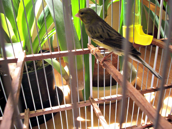 Birds in captivity should be monitored for signs of illness