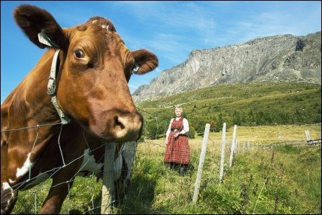 Norwegian Cow and Dairy Maid