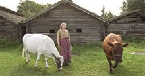 Scandinavian Cows and Dairy Maid