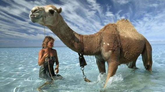 Camel at the Beach (Image via Science Dump)