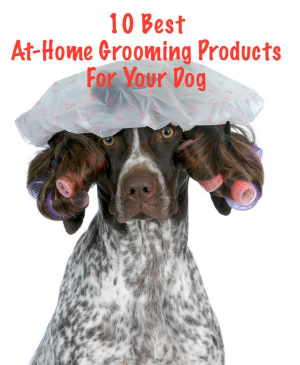 10 Best Grooming Products For Your Dog