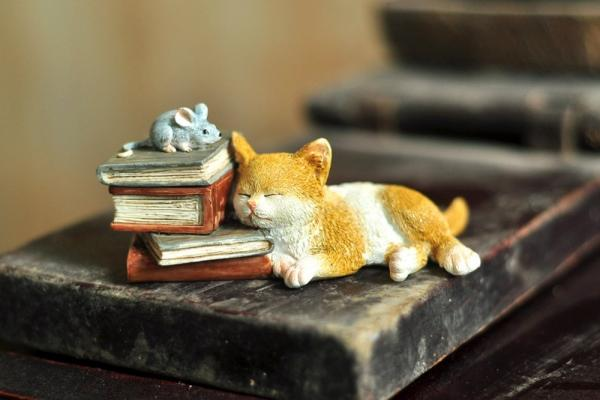 Kitten Napping on Books