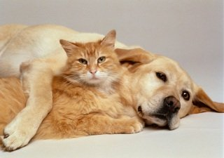 Dogs and cats live longer when they are thin and fit: image via news92fm.com