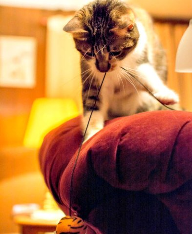 Cat Toys: Cats love toys on strings