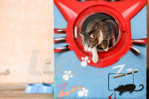 Caring Vet Turns Recycled Washing Machines Into Dryer Cat Shelters